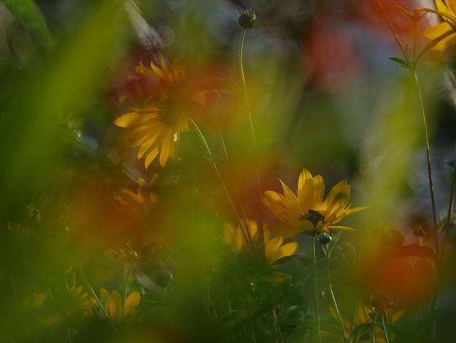 Evening Blooms