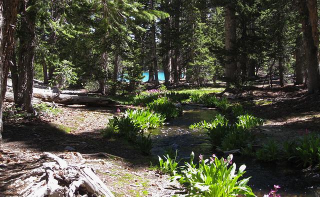 Great Basin National Park Alpine lakes (#1161)