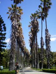 Palm lane.