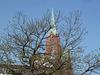 Frühlingserwachen von altem Baum, vor der Gustav Adolfs Kirche