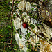 20200315 6784CPw [D~LIP] Mauer, UWZ, Bad Salzuflen