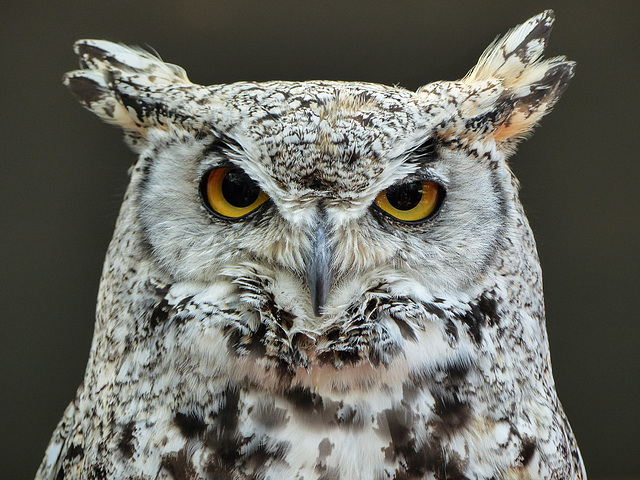 I LOVE owls - in case you didn't know : )