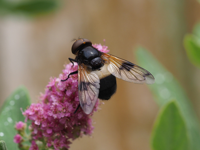 Bumble-Fly
