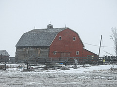 Old red barn on a foggy day