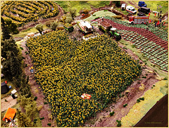 Liebe ... im Sonnenblumenfeld ... (PiP)