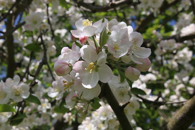Sonnige Blüten