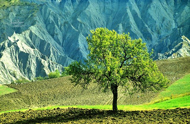 """""""Troverai più nei boschi che nei libri. Gli alberi e le rocce ti insegneranno cose che nessun maestro ti dirà.""""  (San Bernardo di Chiaravalle)"""