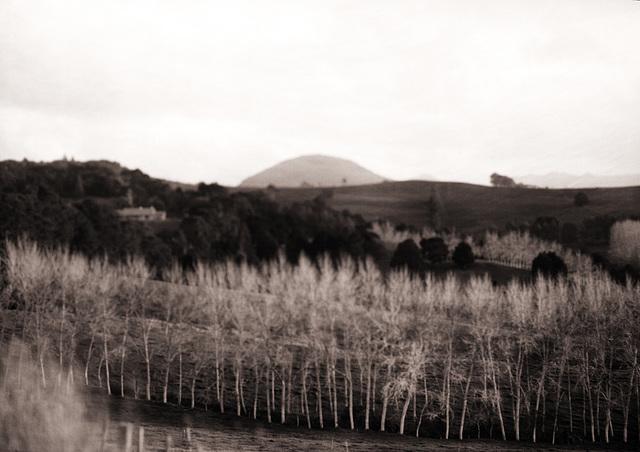 Maungatapere Mountain