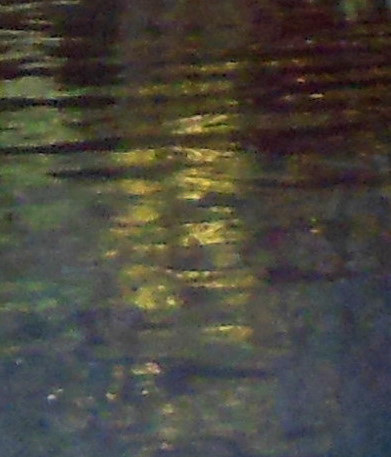 REFLET D'OR / GOLDEN REFLECTION