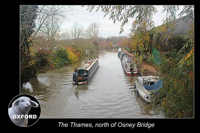 The Thames north of Osney Bridge - Oxford - 18.11.2014