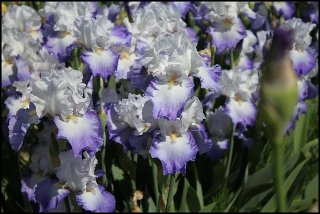 Alizés chez Iris 26