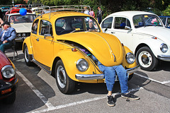Lesser spotted Yellow people eater Beetle