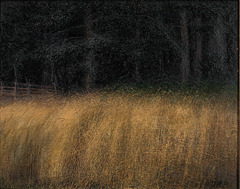 """""""The Meadow""""."""
