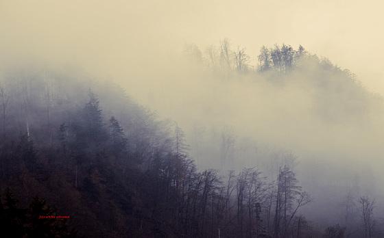 Nebel wallen ~ ~ ~