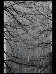 Tower hotel 47/50: Fog