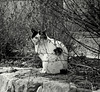 un gatto francese ;-)