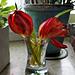 Heute 2cl Tulpen