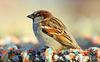 Sunny sparrow