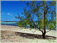 Sakalava Lodge - grande spiaggia deserta (239)