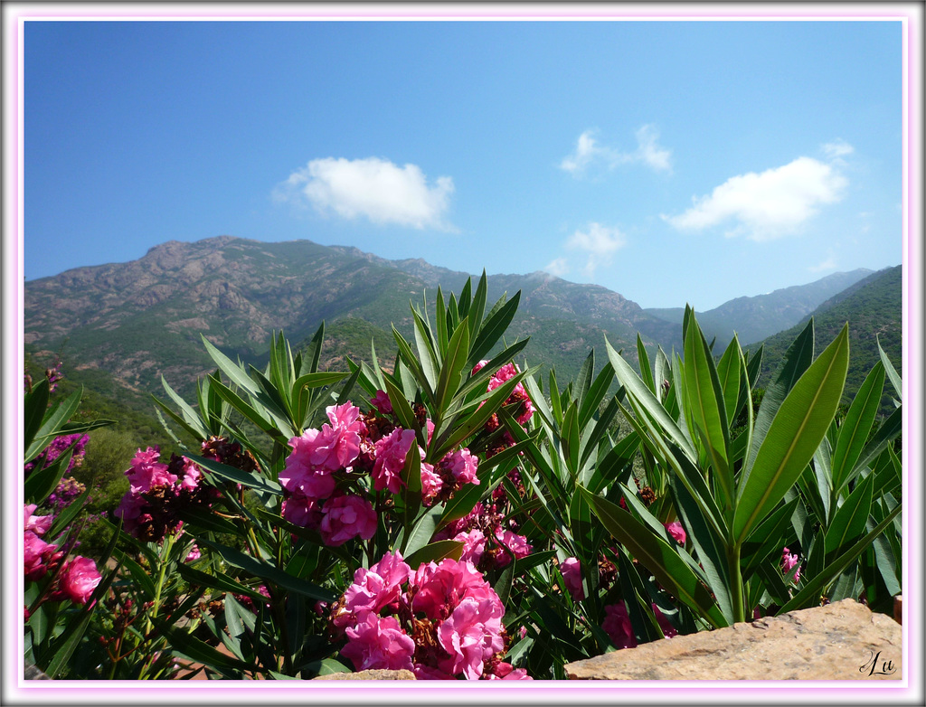 **Image de Corse **