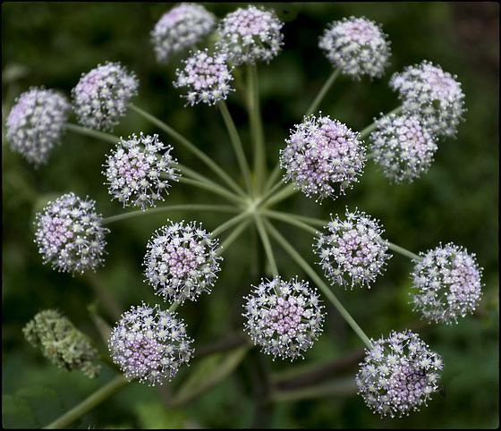 Univers vegetal