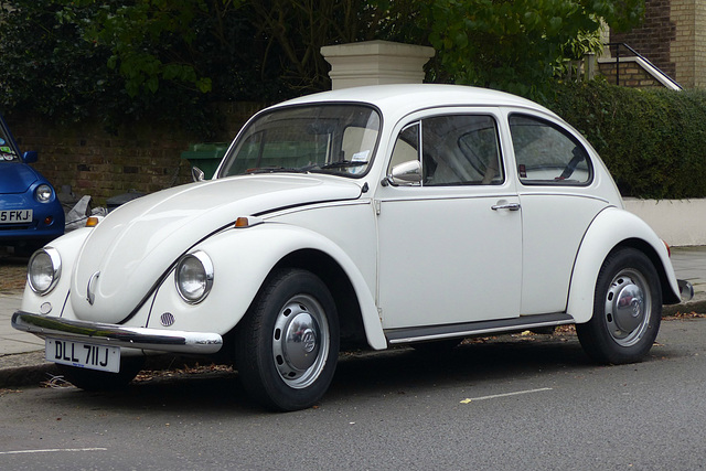 NW3 Beetle (2) - 16 October 2015