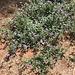 Weed Habit   IMG 3762