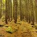 Wood Path 1