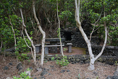 Azores, The Island of Pico, A Place for Barbecue in the Woods