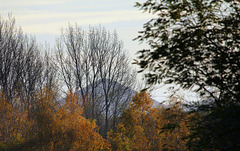 Terril d'automne