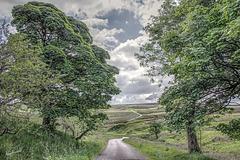 Axe Edge Moor   /   June 2021