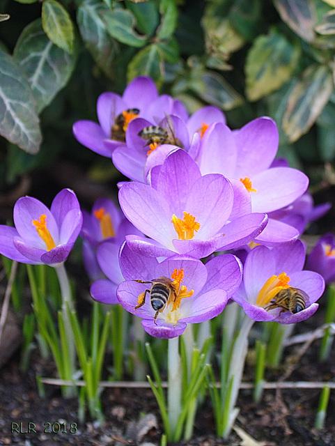 Frühlingsfestmahl der Wespen