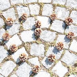 zakochane szyszki. Pine cones