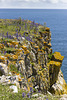 Lichens and Viper's Bugloss on Mowingword Point
