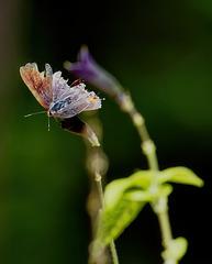 Butterfly.  9134166