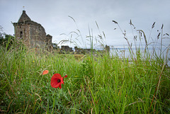 Poppy at St Andrews Castle