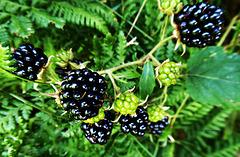 ... die Früchte des Waldes ...