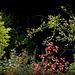 Ikebana des bois