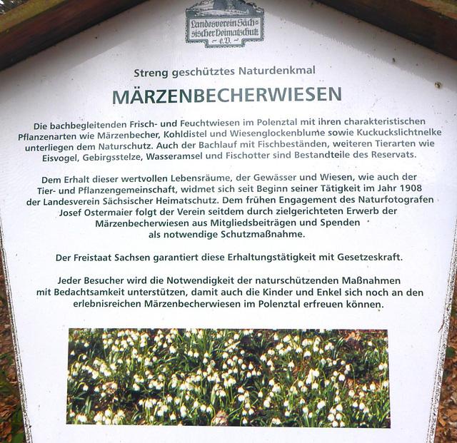 Märzenbecher im Polenztal - 2017
