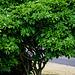 A Tree During the Coronavirus Pandemic