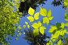 Leaf Up