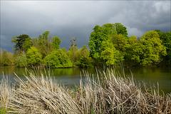 Bois de Vincennes, Lac Jaune