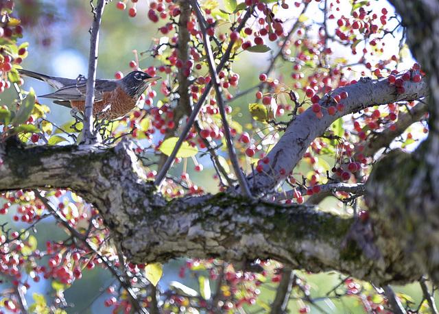 birdwithberries