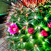 Kleiner grüner Kaktus. ©UdoSm