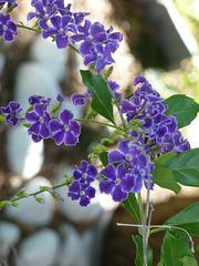 P like PURPLE flowers