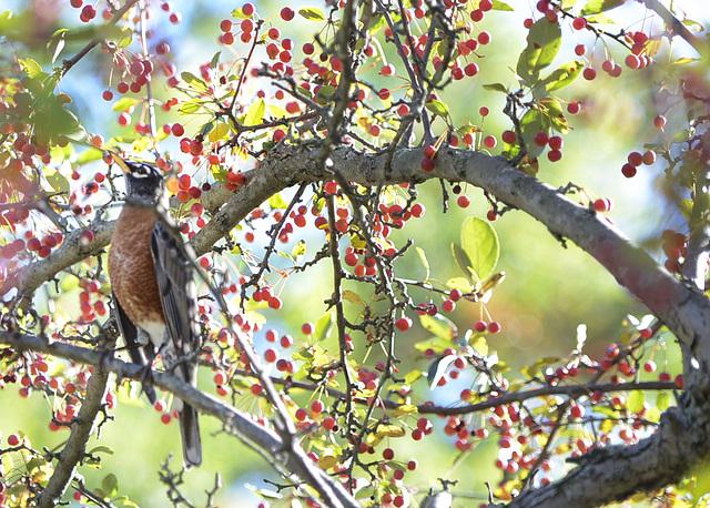 birdwithberries1