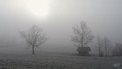 winter brume