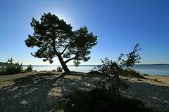 Lac de Lacanau (Gironde - France)...