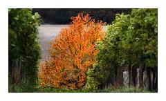 Herbst_Bekleidung