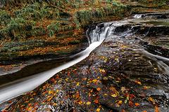 Autum Leaves & running water